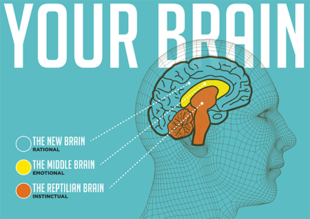 Three parts of the brain from SalesBrain